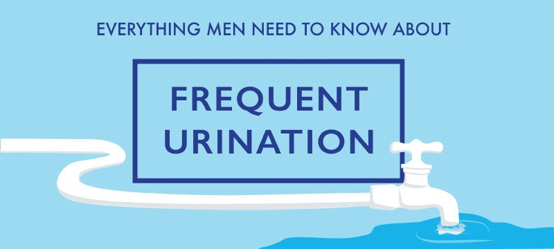 frequent urination in men: everything you need to know - bens prostate, Skeleton